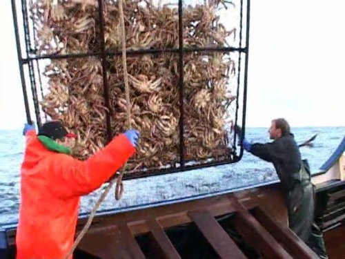 """Deadliest Catch"" On the Crab Technical Specifications"
