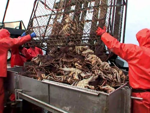 """Deadliest Catch"" No Season for Old Men Technical Specifications"