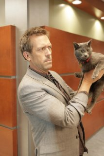 """House M.D."" Here Kitty 