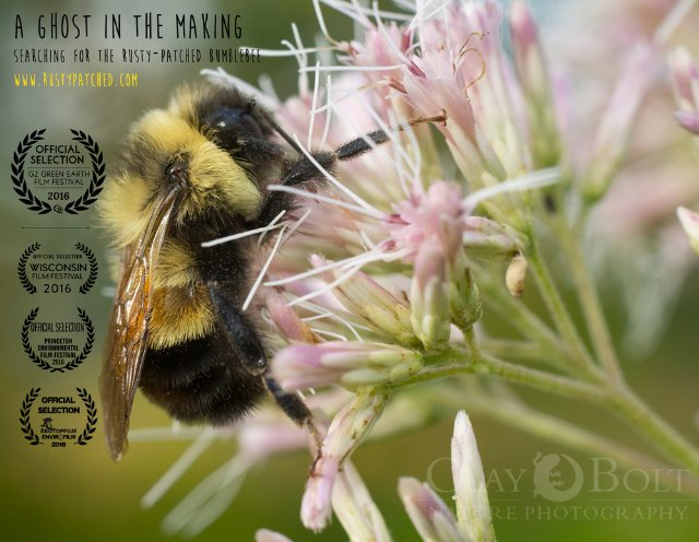 A Ghost in the Making: Searching for the Rusty-patched Bumble Bee | ShotOnWhat?